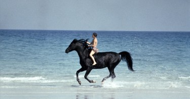 'The Black Stallion'